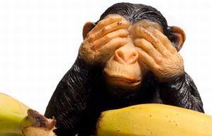 monkey_banana.jpg